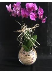 dekor mor orkide