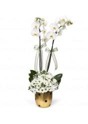 orkide ve papatya arajmanı